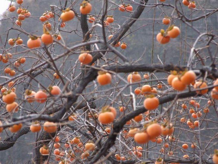 秋天的果实图画儿童,秋天的果实手工作品,秋天的果实作文,秋天的